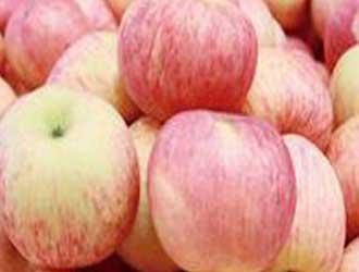 苹果矮化砧的主要优点