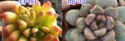 多肉植物盆栽销售