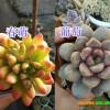 十大漂亮的多肉植物/多肉植物盆栽销售