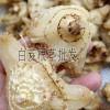 白芨块茎种子价格_白芨块茎种子价格-13508884888