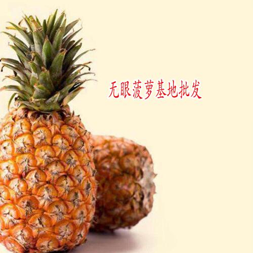 云南无眼菠萝基地图片