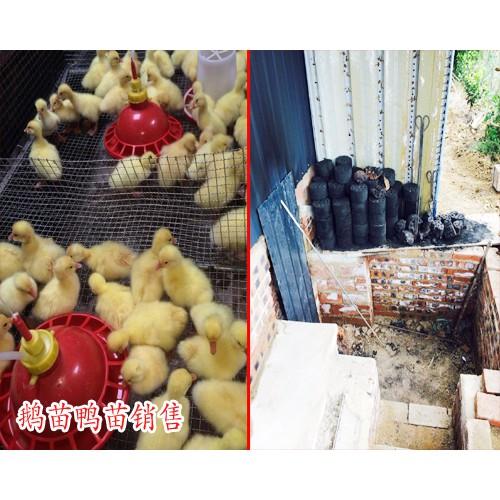 古老孵化鹅苗方法_鹅鸭苗养殖基地