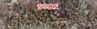 灵香草报价_灵香草杀虫剂-13769388624