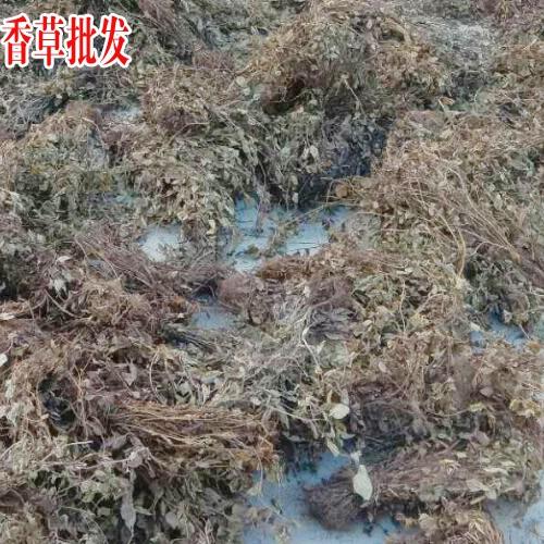 马关灵香草市场价多少钱一斤