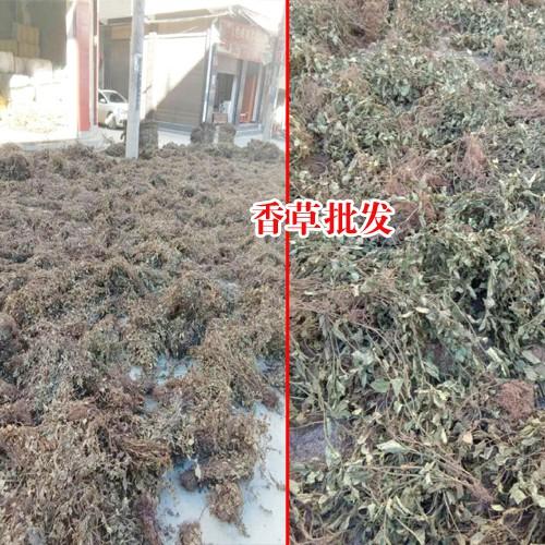 马关县2017年灵香草价-13769388624