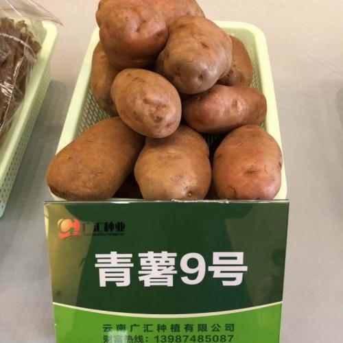 """合作88号""""、 青薯9号、希森6号、靖薯7号-会泽洋芋分类"""