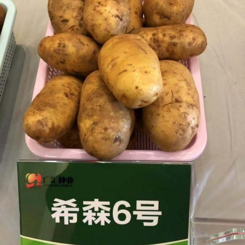 马铃薯新品种试验、示范、推广公司