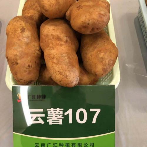 """马铃薯称之为""""洋芋"""""""