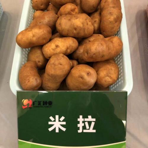 """驾车乡的""""奇彩土豆"""