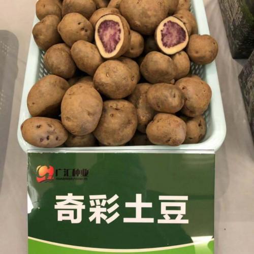 """被誉为""""薯中精品_奇彩土豆"""