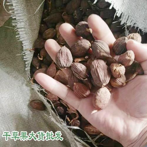越南、红河和文山草果产区量有多少?
