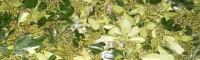 农户储存鲜青花椒方法不防试试