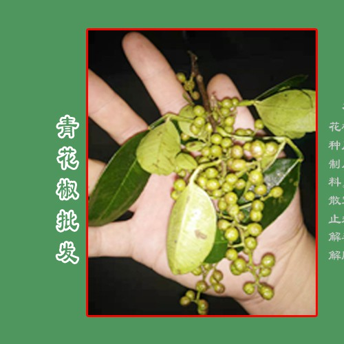 青花椒每亩收入在多少?_青花椒价格免费咨询