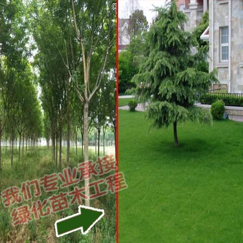 绿华园林工程有限公司_免费苗木求购信息