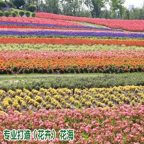 花海品种花卉这几点很重要