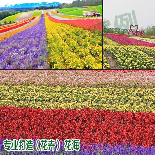 这些花卉品种适合冬天种植(附图)