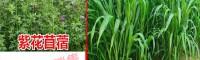皇竹草_皇竹草种植技术与要求