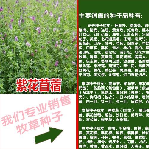 高粱和苏丹草新鲜产量6000-10000kg