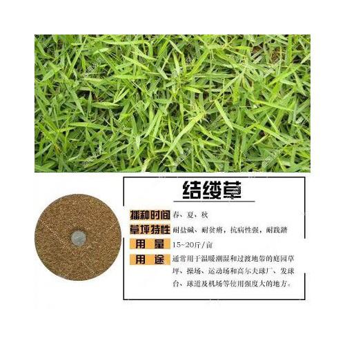 暖季型草主要有哪些几个品种