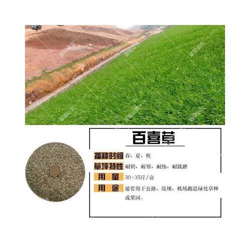 高羊茅种子多少钱一斤?