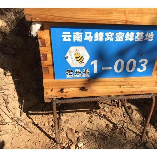 云南中蜂养殖技术培训