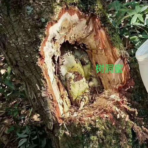 云南野生树洞蜜_景洪勐罕帕当下寨生态蜂蜜养殖基地_树洞蜜