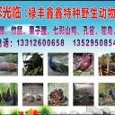 禄丰鑫鑫特种野生动物养殖场