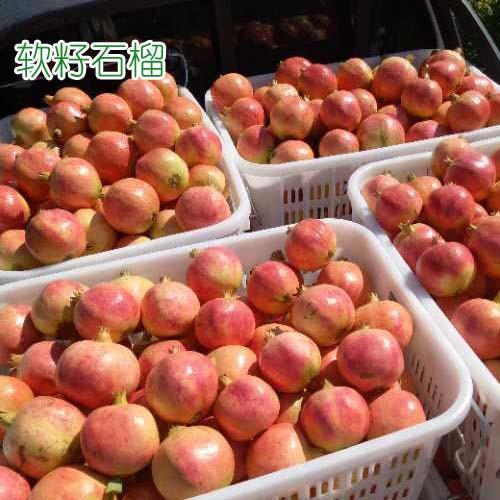软籽石榴树苗价格是多少钱?