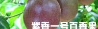 百香果苗怎样种?_百香果苗种植场13788095485