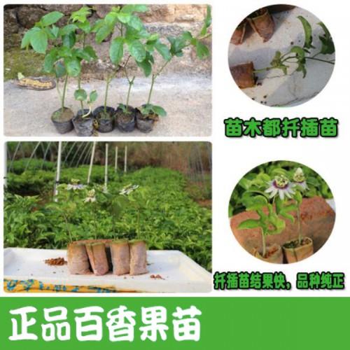 百香果苗哪个品种最好?
