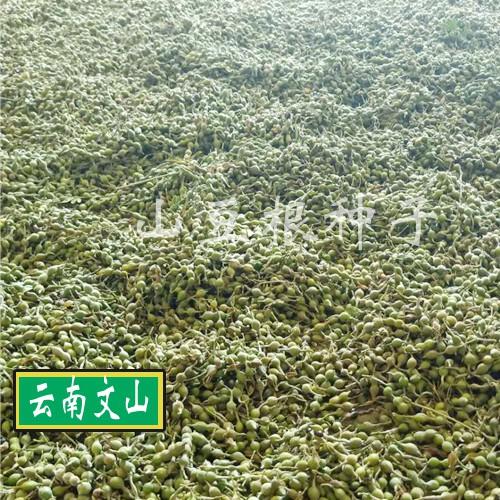 购买山豆根种子6个要点, 选购种子的方法技巧_山豆根种植网
