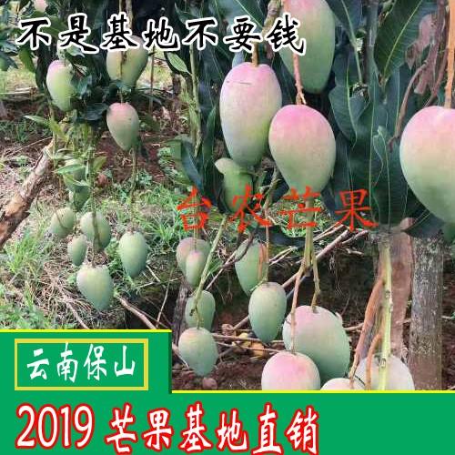 2018-2019青芒果多少钱一斤