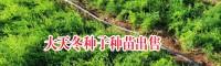 2019天冬价格, 广西钦州市灵山县天冬多少钱一株