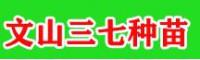 苗乡三七_云南文山三七种苗销售公司