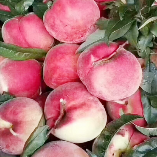 适合丽江雪桃种植的海拔要求