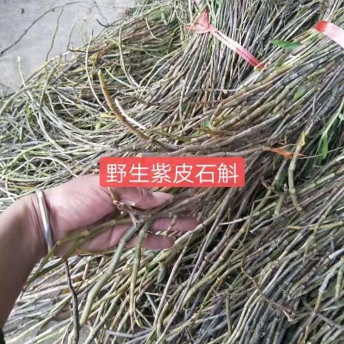 种植户对铁皮石斛的技术&铁皮石斛怎么种植