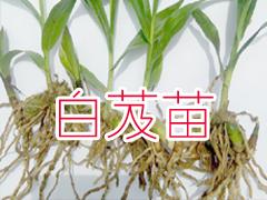 丽江臻芸春农业开发有限责任公司