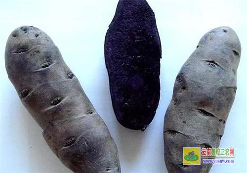 彩色马铃薯与普通马铃薯有什么区别