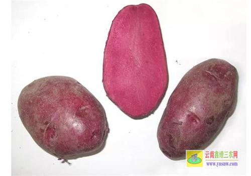 彩色马铃薯新品种