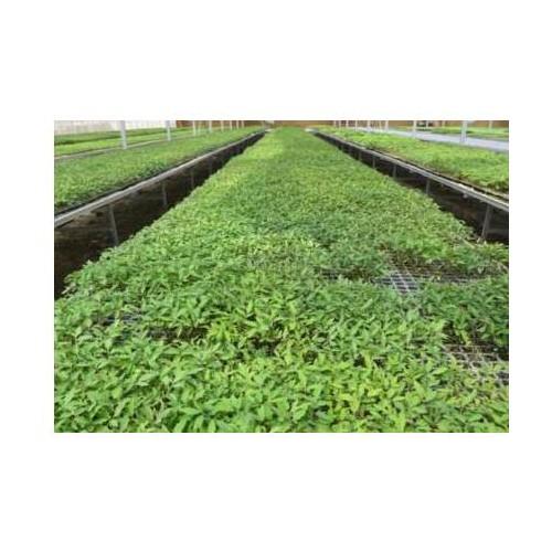 绿色有机农业的未来是什么?投资要注意几个问题
