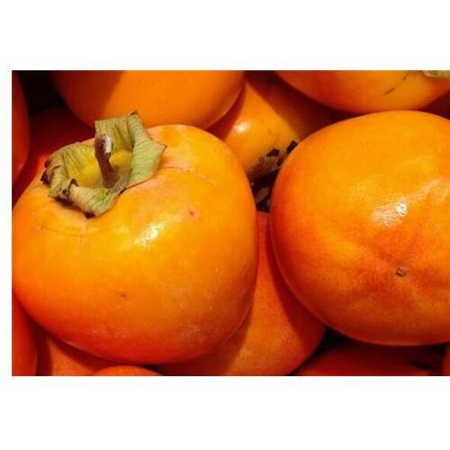 柿子水果什么时间上市-雷正荣柿子苗