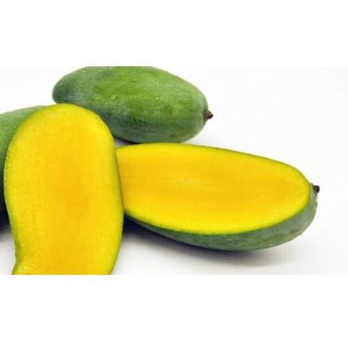 芒果品种有哪些|桂七芒又名桂热82号介绍_广西桂七芒苗圃