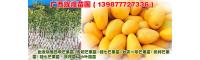 广西辉煌苗圃[13977727336