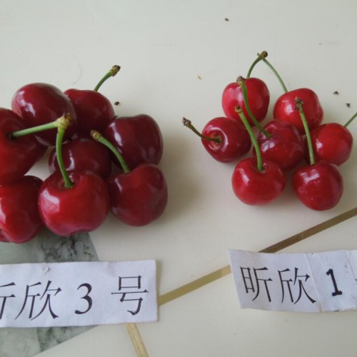 樱桃用什么农药效果好?