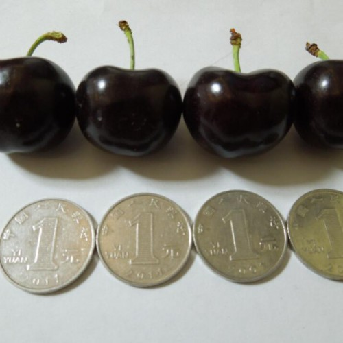 樱桃苗木价格是要多少钱一棵?附栽种关键点