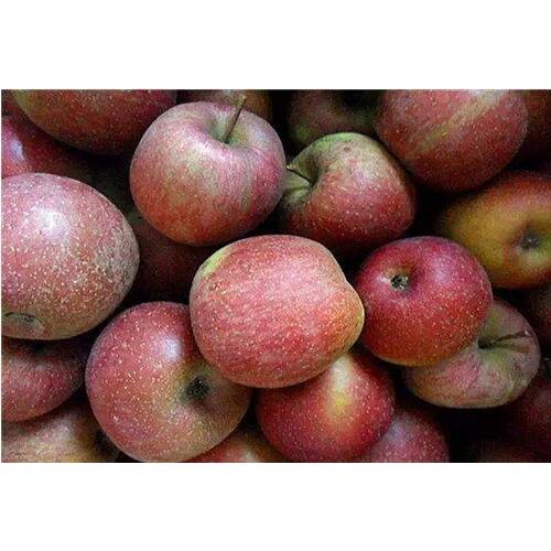 丑苹果和一般苹果差别是啥?原产地知名的在哪儿?