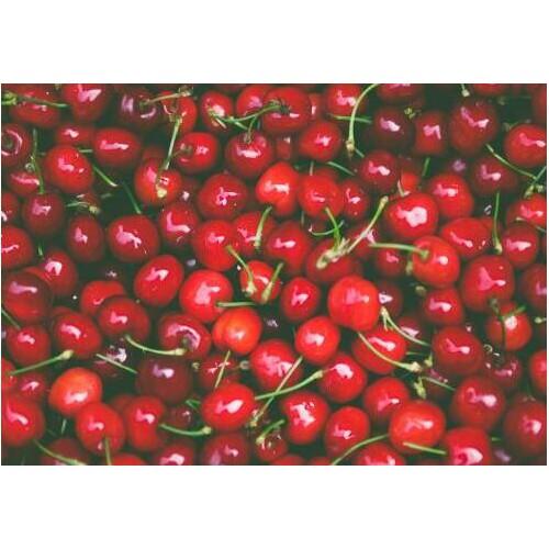 种10亩樱桃大概赚要多少钱?如今种植赚钱吗?