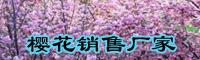 樱花树价格要多少钱一棵?樱花树种植技术有什么?
