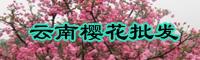 樱花果苗什么时间栽种?樱花苗种植技术