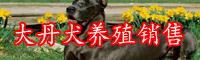大丹犬的市场行情-养殖技术